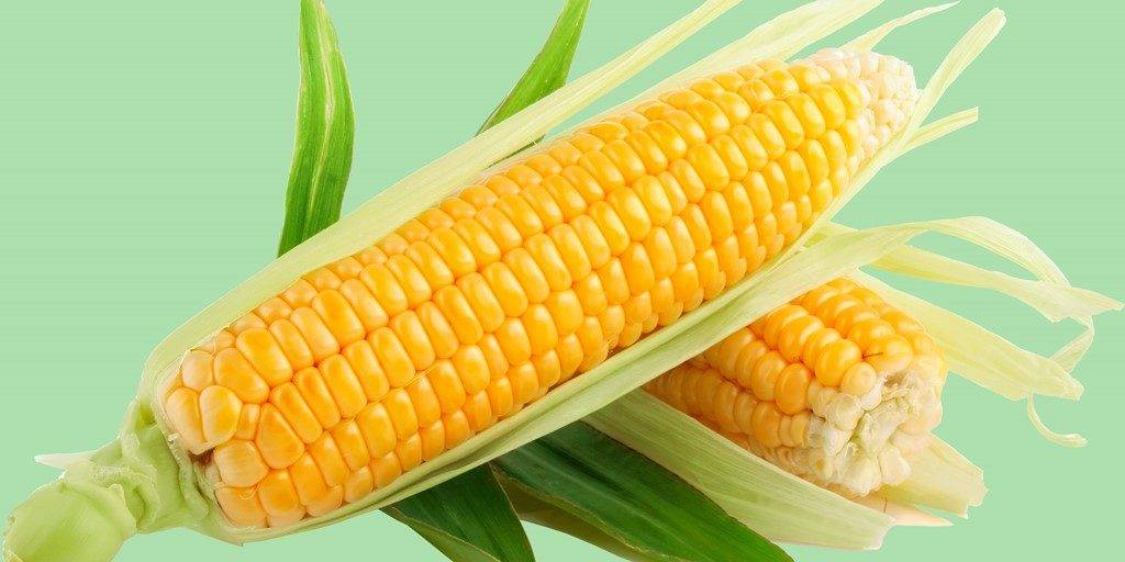 Фото в кукурузе