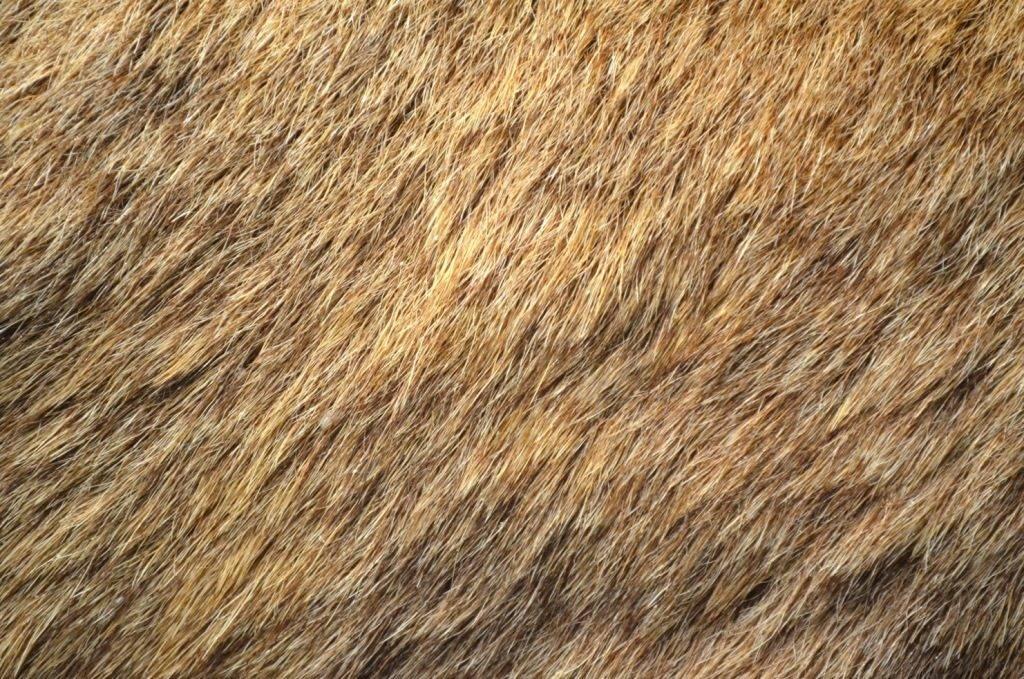 Мех (шерсть) оленя фото
