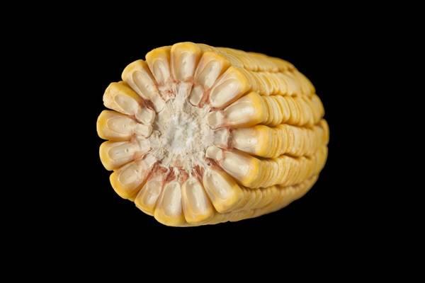 Полузубовидная кукуруза (лат. Zea mays semidentata)