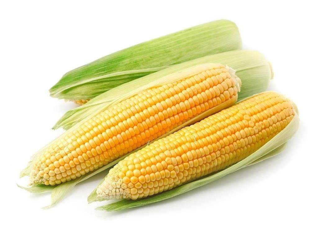 Початок кукурузы фото