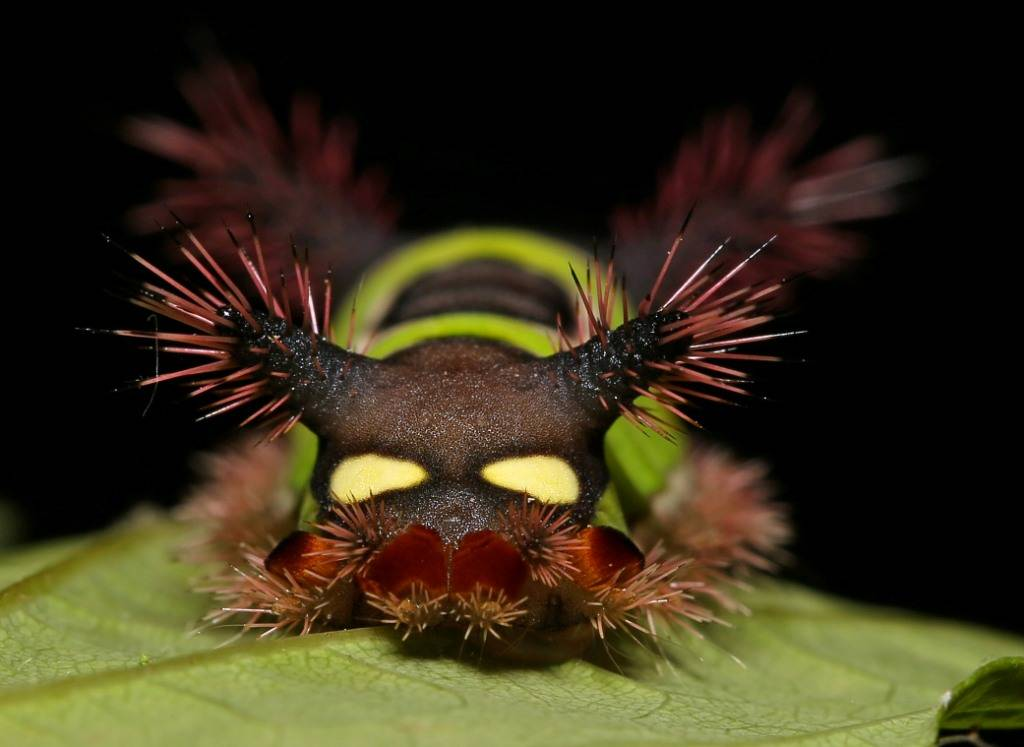 мохнатая гусеница. фото