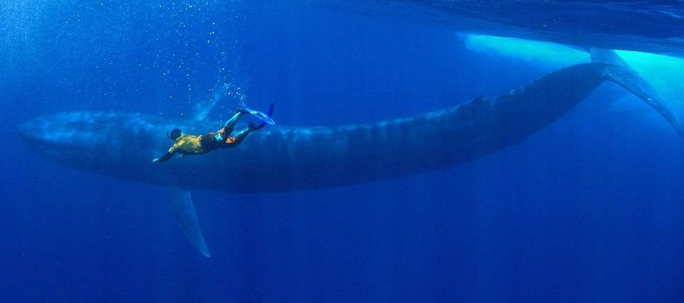 Фото большого кита