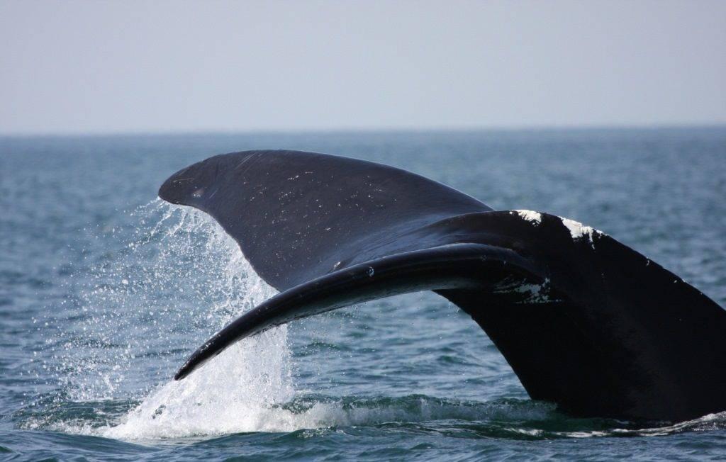 Хвост кита фото