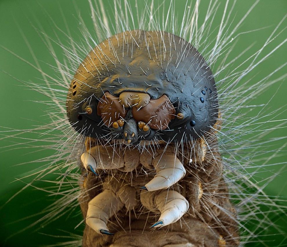 Челюсти гусеницы
