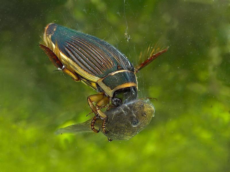 Что едят жуки
