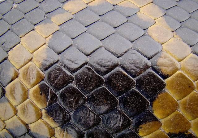 Кожа анаконды фото