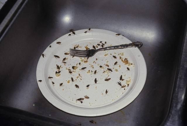 Тараканы в квартире фото