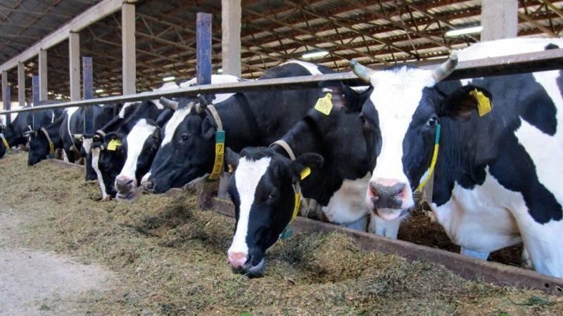 Ферма коров фото