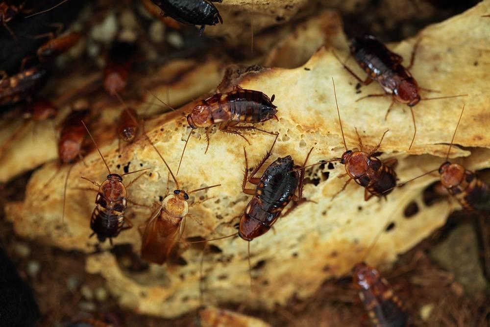 Чем питаются тараканы фото