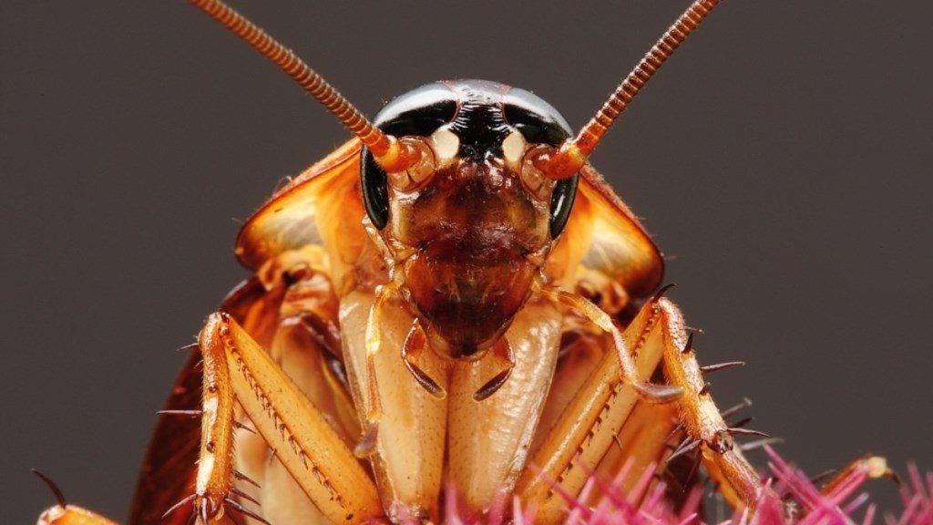 Голова таракана фото