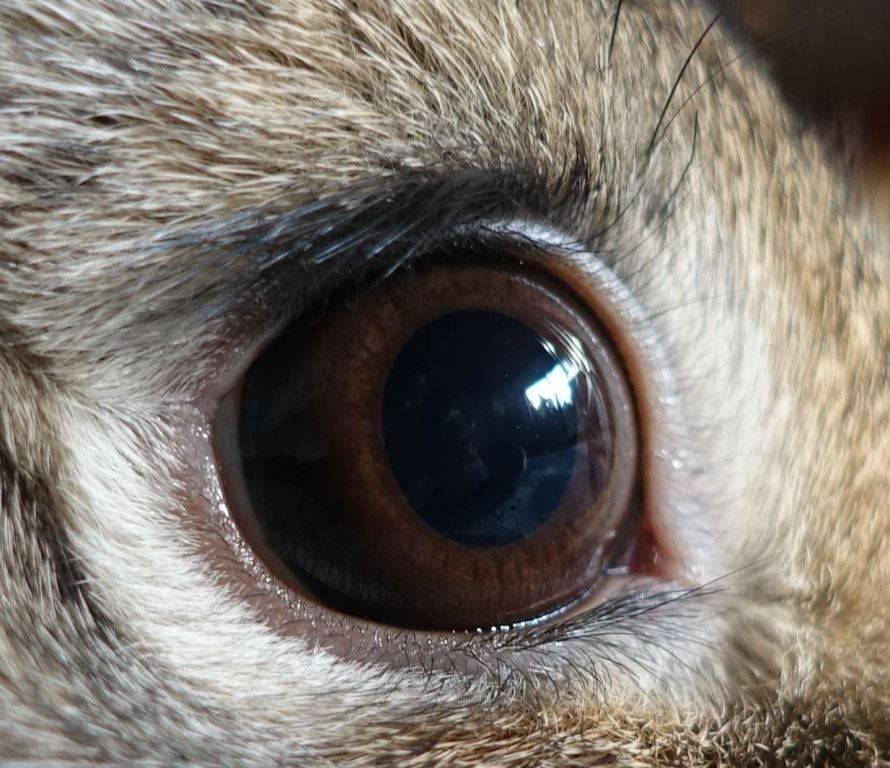 Глаз кролика фото