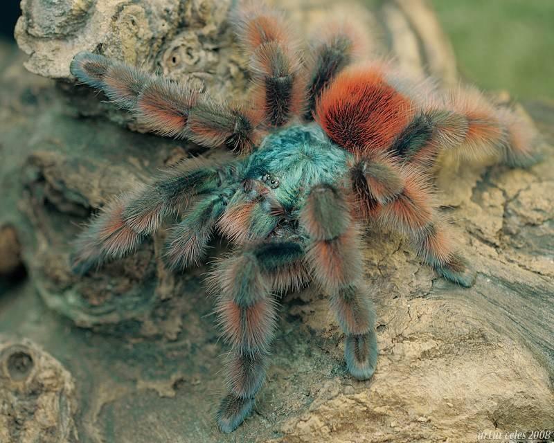 надо красивые названия пауков с фото популярный инстаграм
