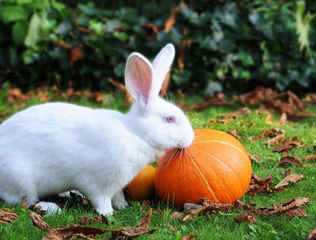 Кролик Белый Великан фото