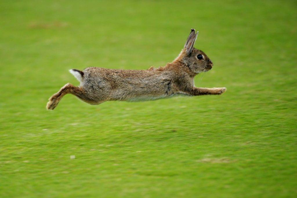 Кролик бежит фото