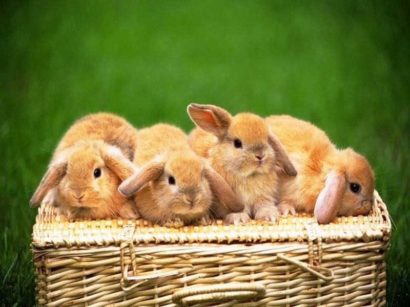 Маленькие кролики фото