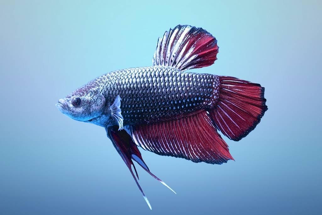 картинки рыб пород создают