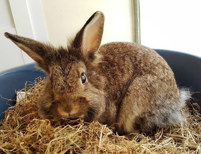 Самка кролика фото