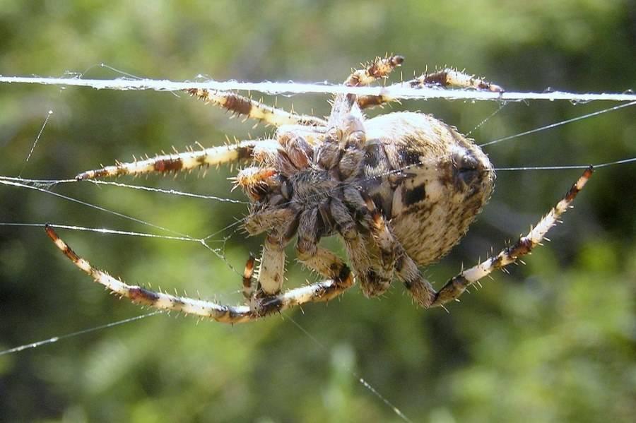 что все виды пауков в россии фото освещают определенную