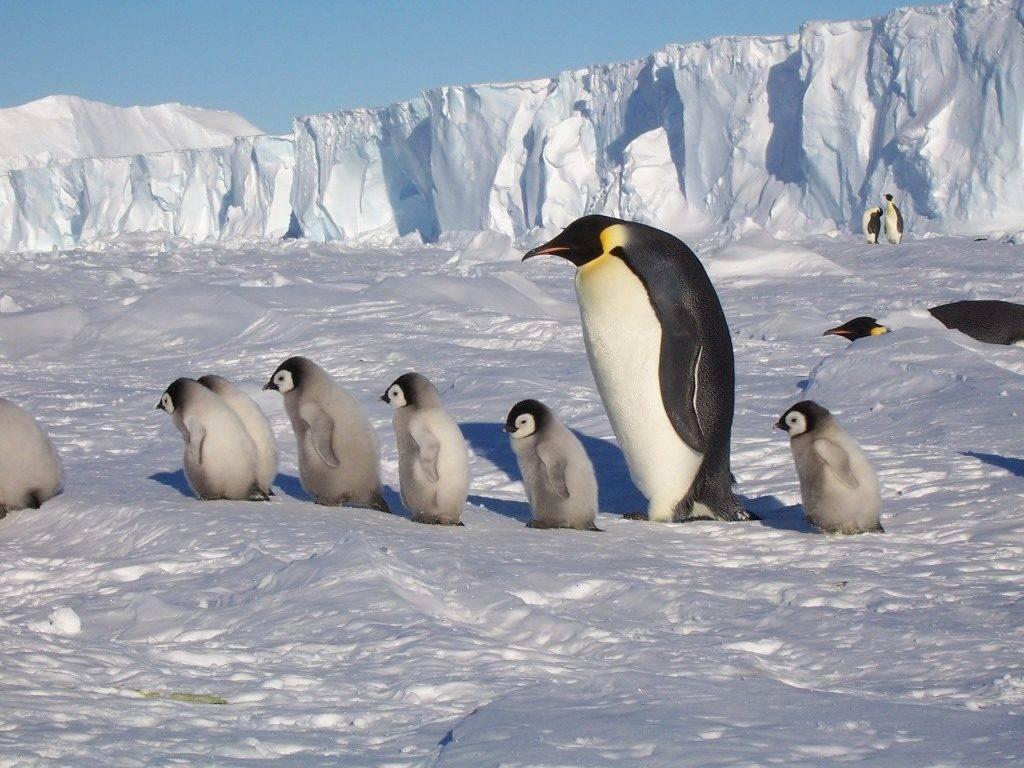 Фото пингвинов в Антарктиде