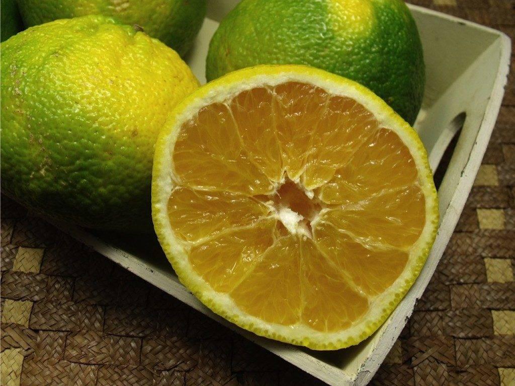 Агли (агли-фрукт) фото