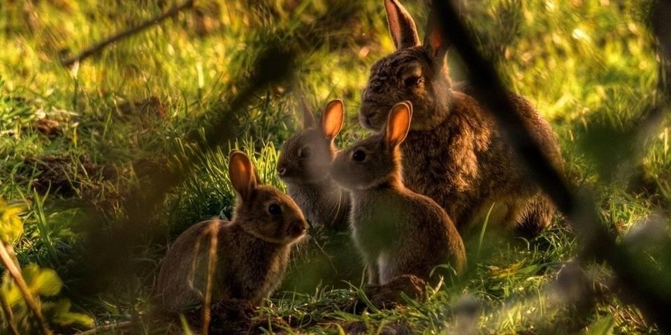 Где живут кролики в природе фото
