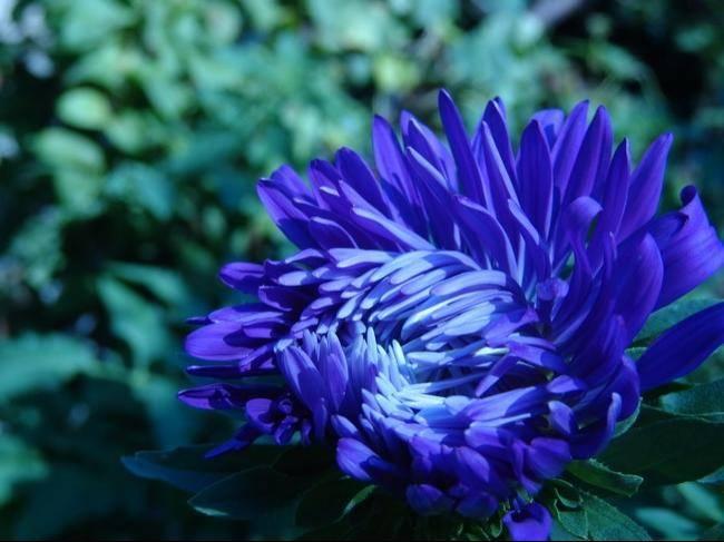 Клумбы из низкорослых сортов цветов 43