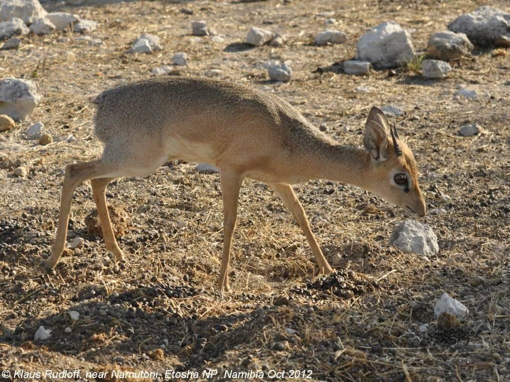 Детеныш антилопы фото