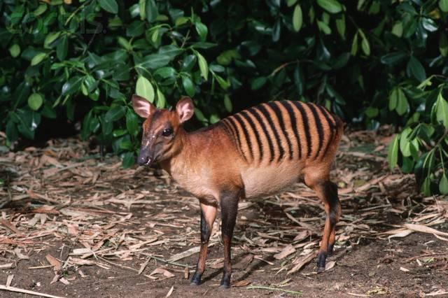 Антилопа – описание, виды, фото, где обитает, чем питается
