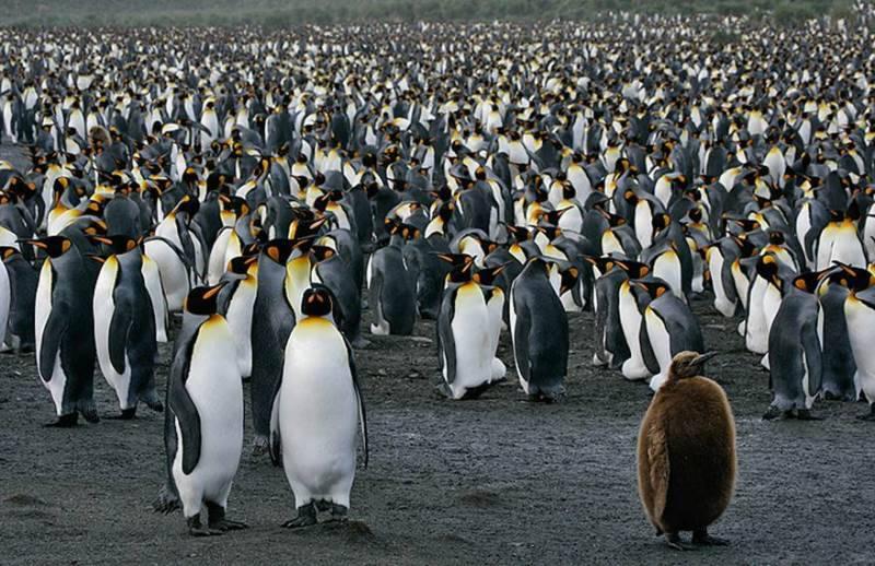 Колония пингвинов фото