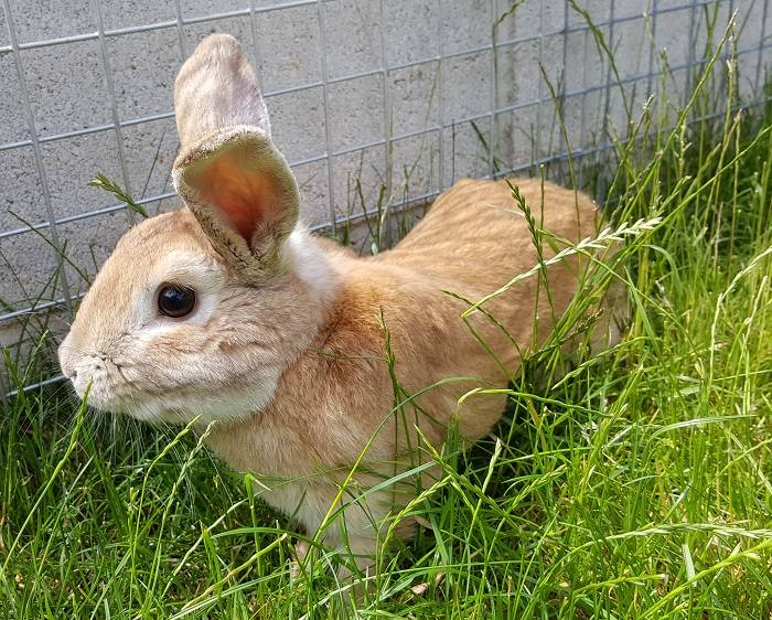 Кролик самец фото животного