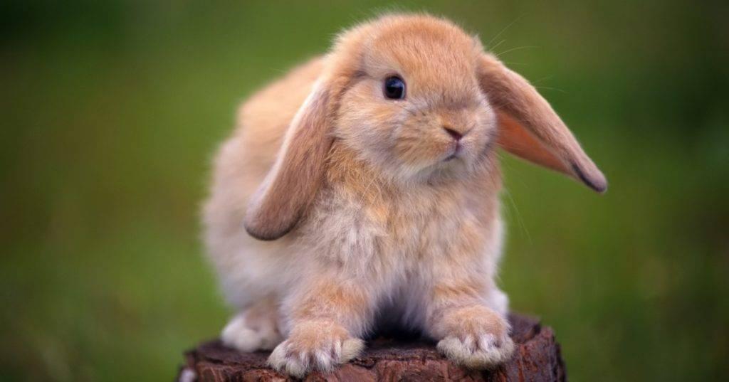 Кролик фото