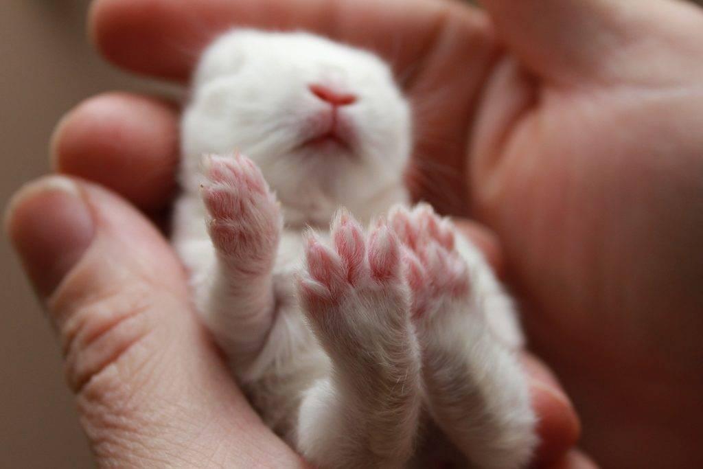 Лапки кролика фото