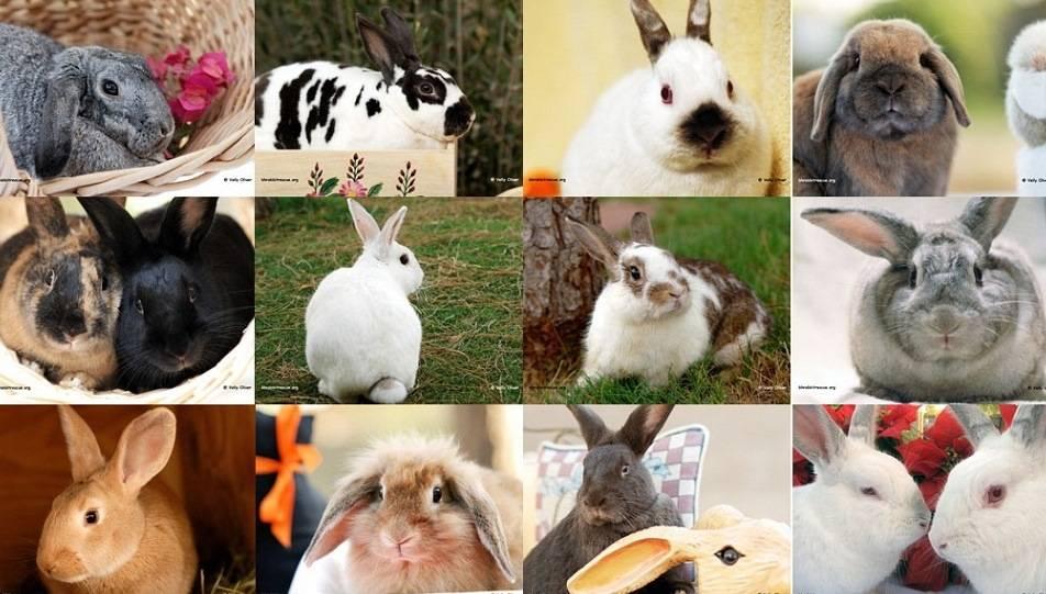 Породы кроликов фото