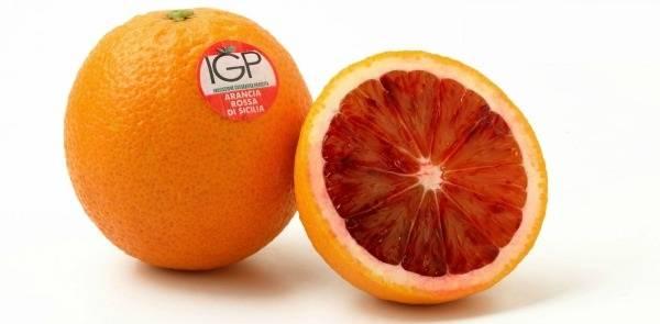 Апельсин Сангвинелло (Sanguinello) фото