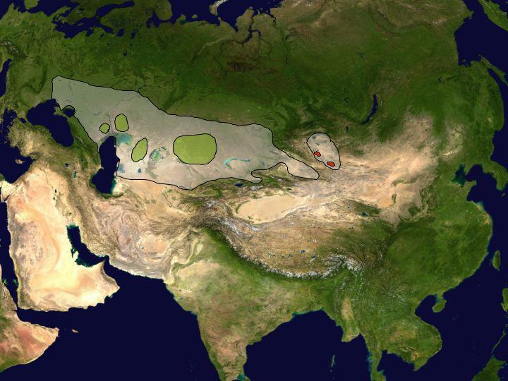 Где живет сайгак