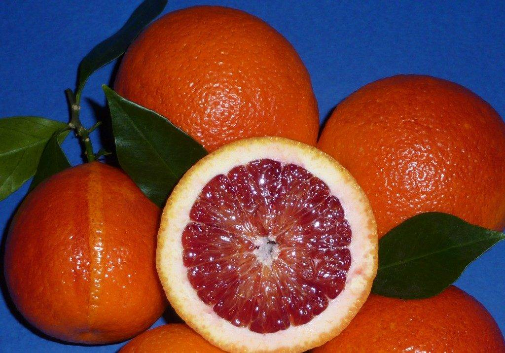 Кровавый апельсин сорт Моро (Moro) фото