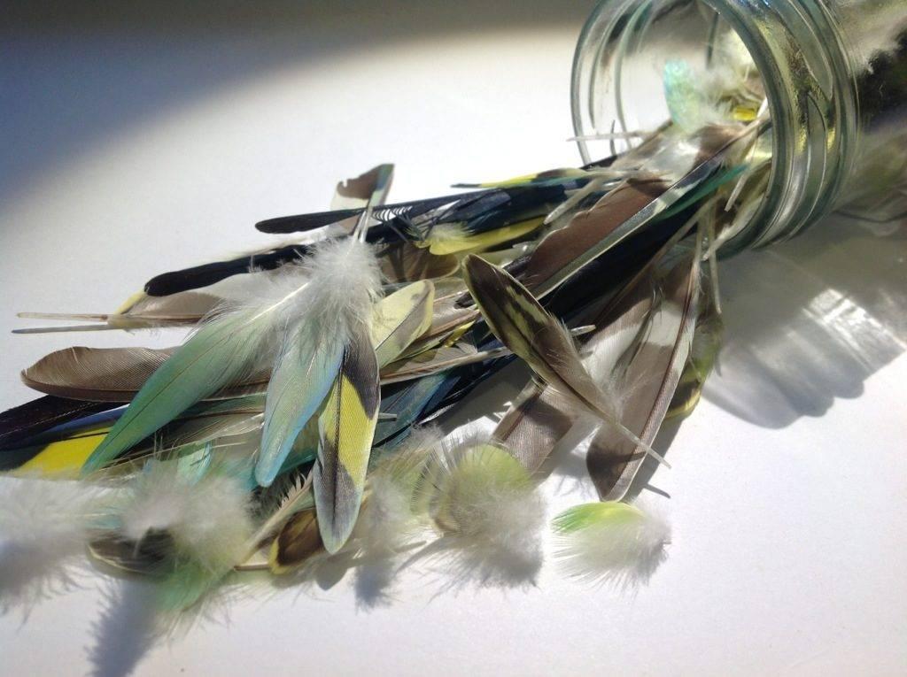 Перья волнистого попугая фото