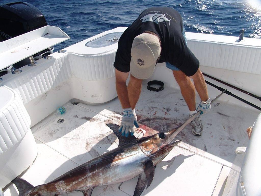 Рыба меч фото