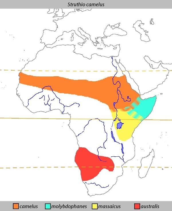 Ареал обитания страусов на африканском континенте