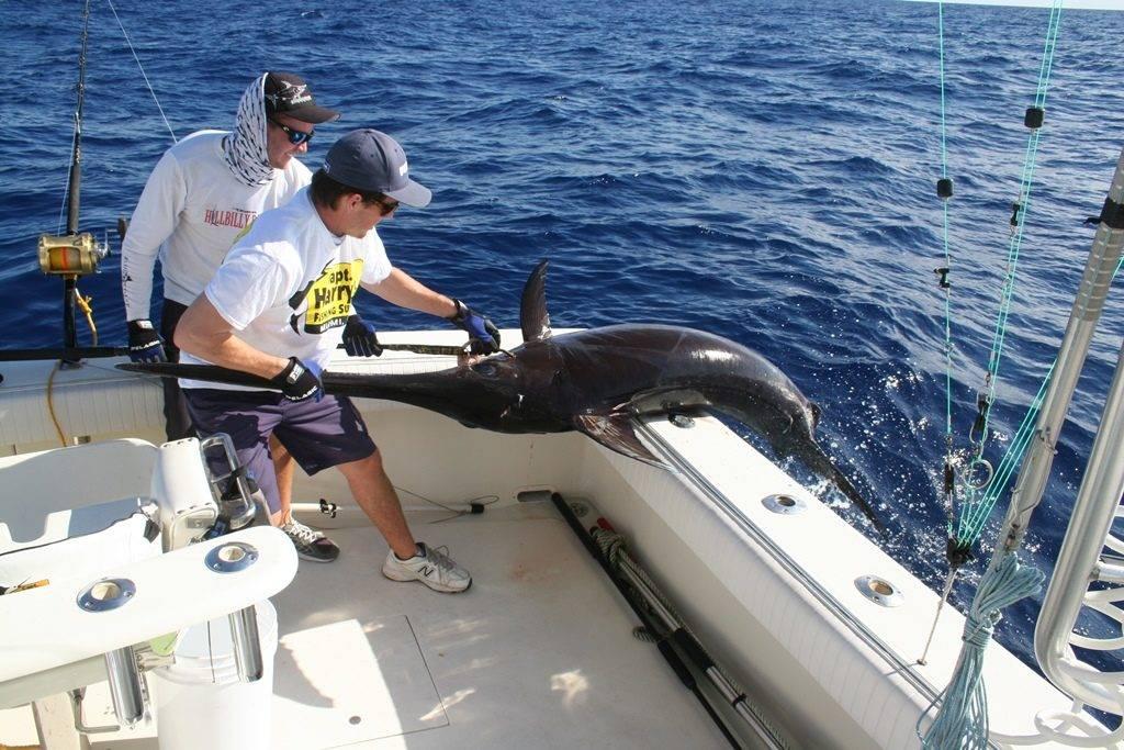 Ловля меч-рыбы фото
