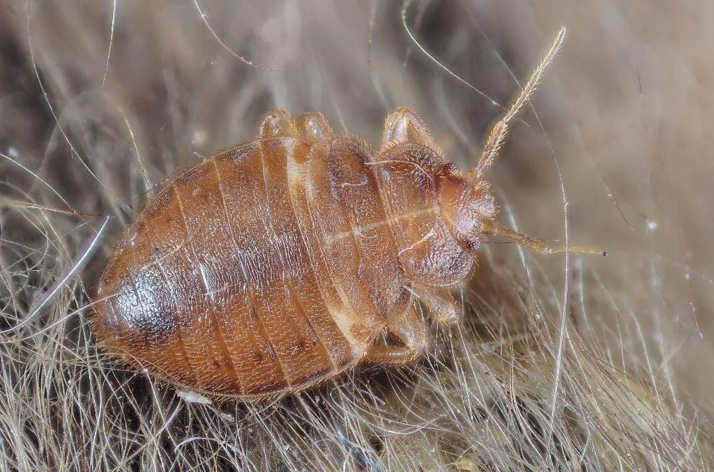избавиться от паразитов в организме народными средствами