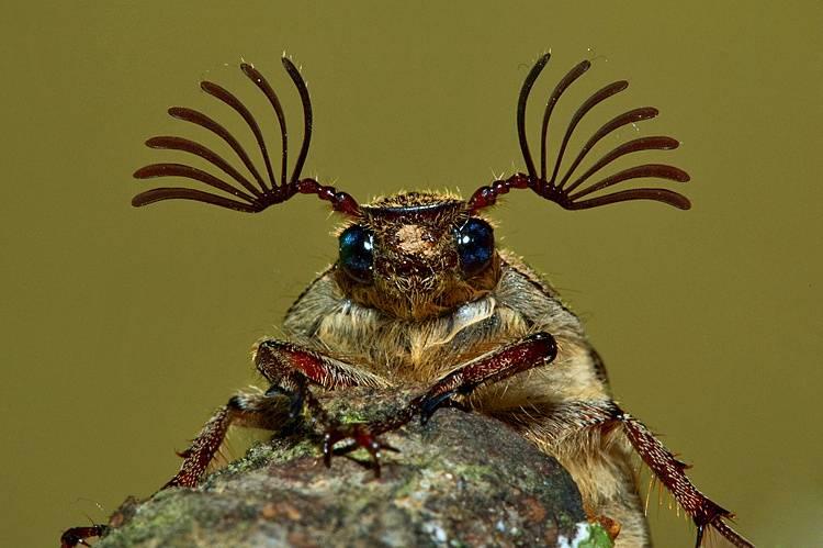 Фото прикол про жука
