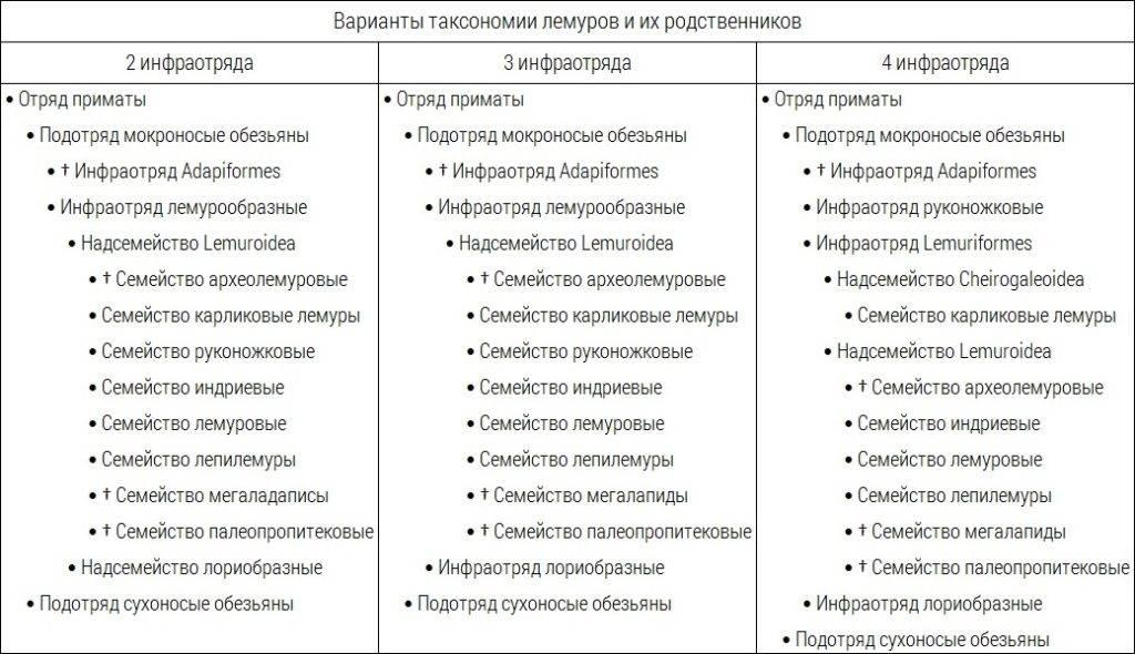 Варианты таксономии лемуров и их родственников