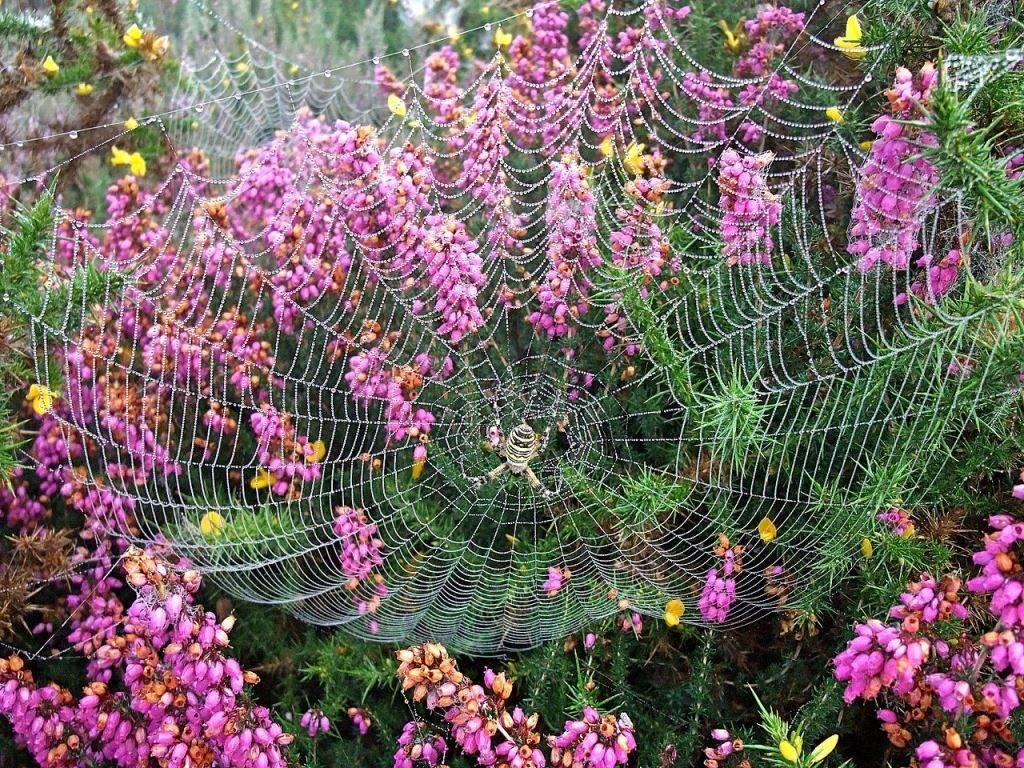 Паутина паука-осы фото