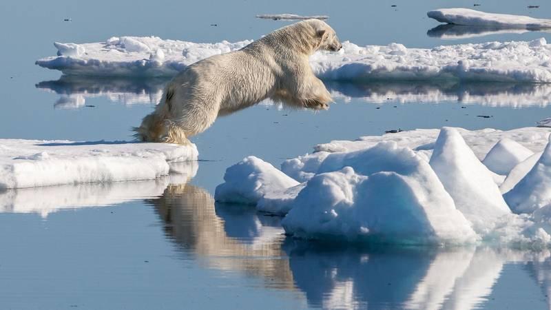 Где обитают белые медведи фото