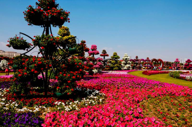 Красивые петунии в ландшафтном дизайне фото