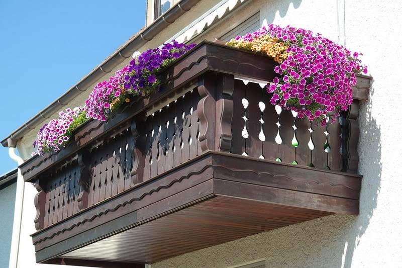 Цветы петуния фото