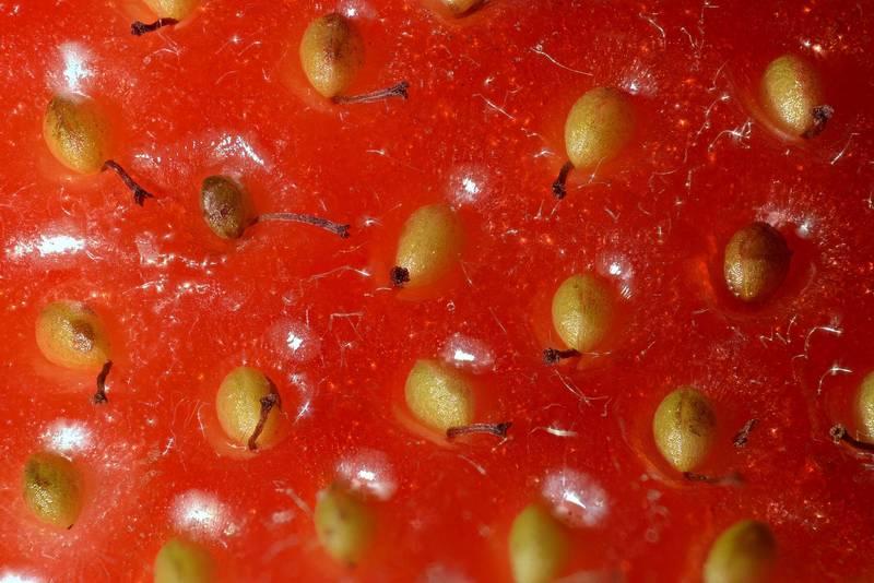 Семена (орешки) земляники садовой фото