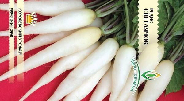 Белый редис Светлячок фото