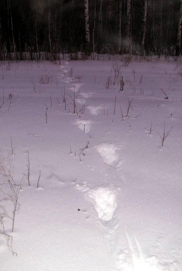 След лося на снегу фото
